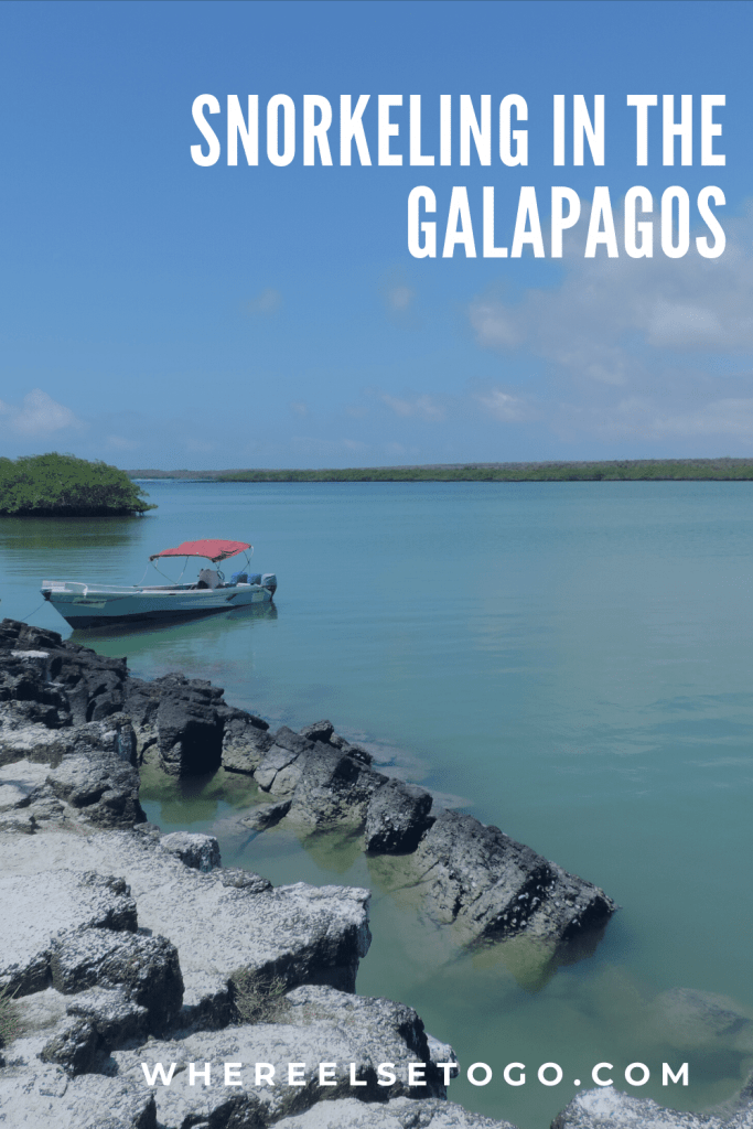 You might think that getting to the Galapagos Islands is too great of a challenge and so have put off visiting the islands because of the travel time involved and some of the tourism restrictions. However, it's an amazing experience to see the animals up close.  #snorkeling #galapagos #beaches #whereelsetogo #islands #ecuador#southamerica