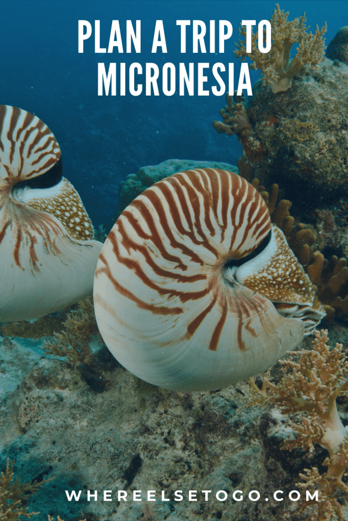 Visiting Micronesia, in general, refers to the opportunity to see thousands of small islands located in the Pacific and which comprise several countries. #micronesia #pacificocean #diving #whereelsetogo #adventuretravel #travel